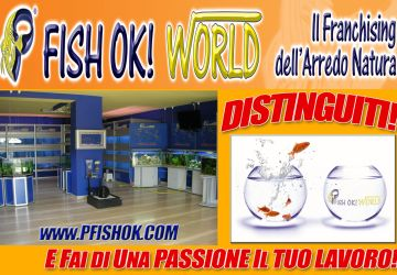 FISH OK SHOP ONLINE ! E-COMMERCE INNOVATIVO 2015