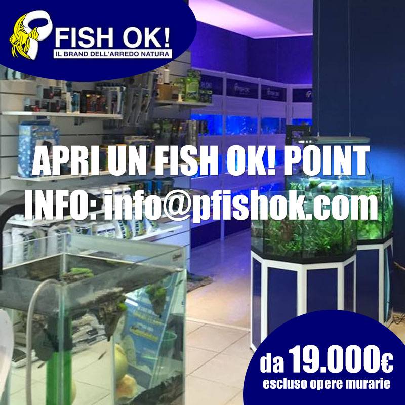 apri full point fish ok!
