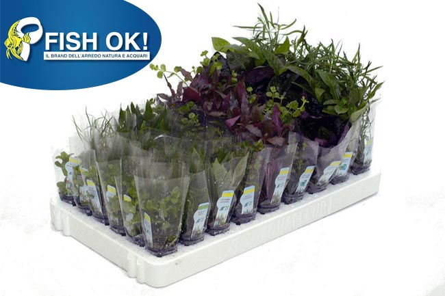 BOX 51 POT MIX LUX ASSORTIMENTO LUSSO (ANUBIAS+ECHIN+CRYPT+MIX)